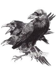 6 crow_three