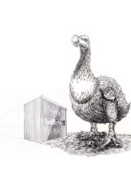 8Dodo and the shed
